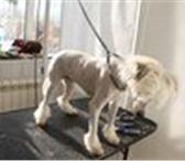 Изображение в Домашние животные Стрижка собак Стрижка собак и кошек  - модельные  -креативные в Клин 1000