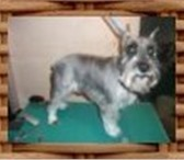 Foto в Домашние животные Услуги для животных Опытный мастер осуществляющий стрижку собак в Москве 1000